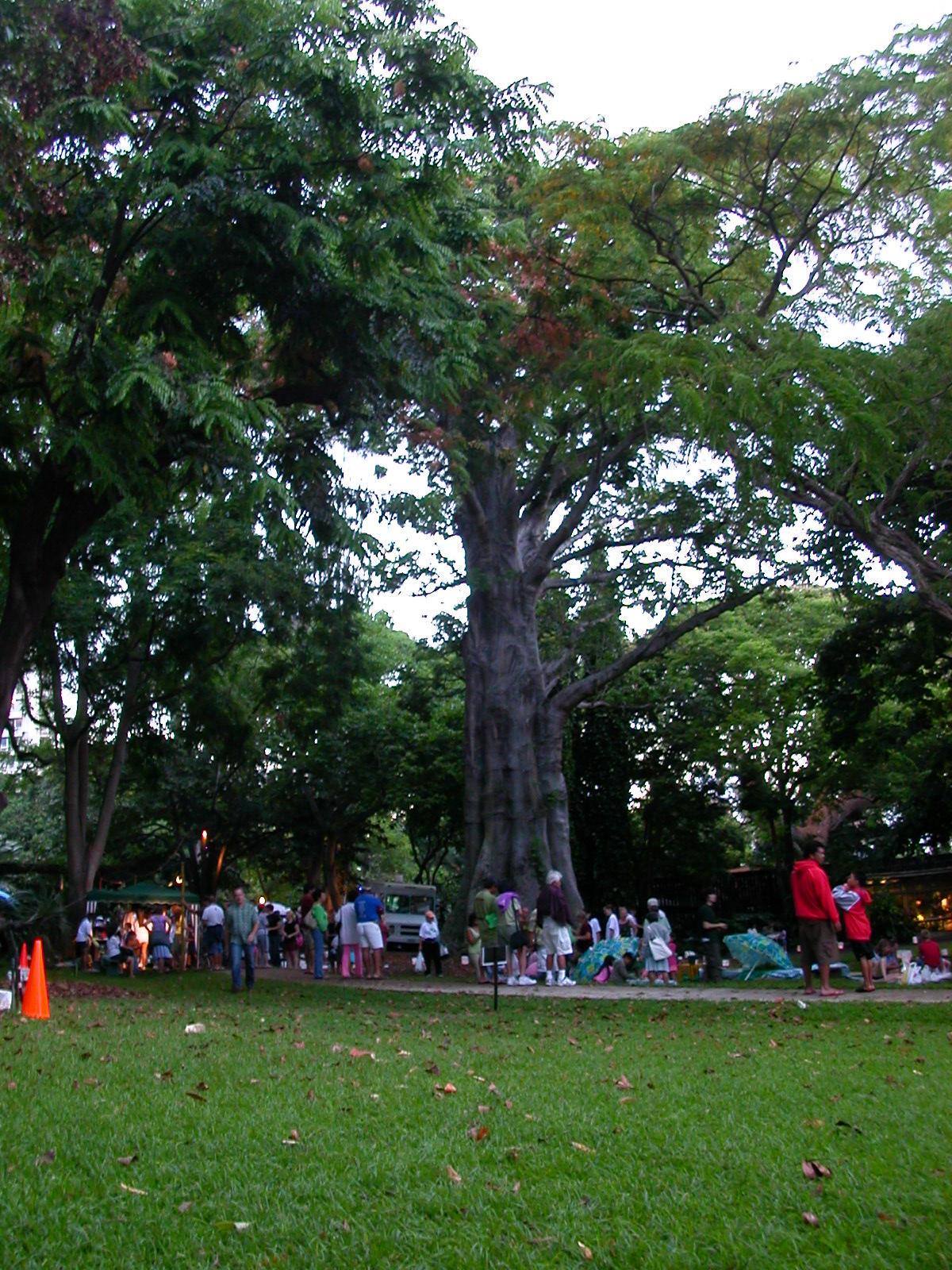 Botanical Garden Downtown Honolulu Garden Ftempo